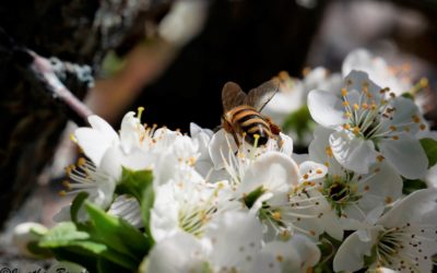 Come utilizzare il miele: in caso di raffreddore e mal di gola.
